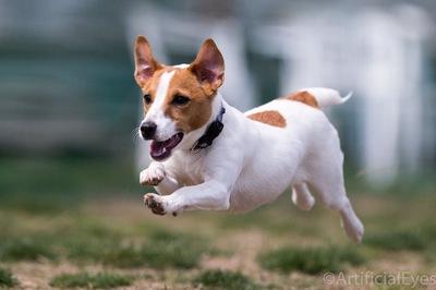 20140714犬.JPG